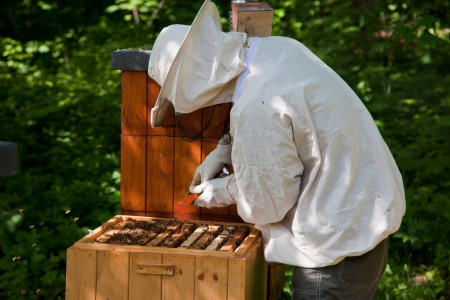 fumigador: Apicultor elimina marco de panal de miel