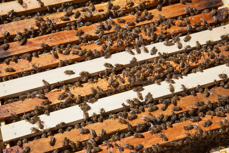 Crowd of working bees on the hive Stock Photo