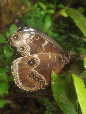 fata morgana: Exotic butterflies in the greenhouse Fata Morgana in the Botanical Garden in Prague