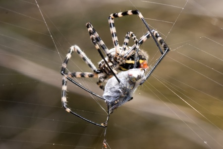 a spider is captive to its prey in its network photo