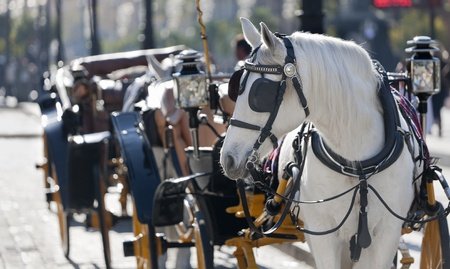 carriage typical Andalusian (southern Spain) Stock Photo
