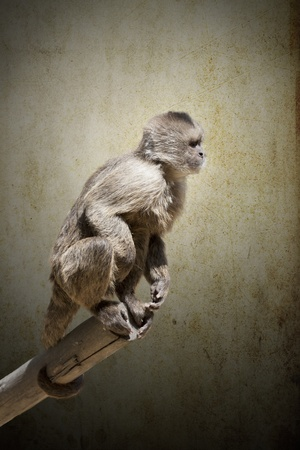 a small monkey climbed a tree branch photo