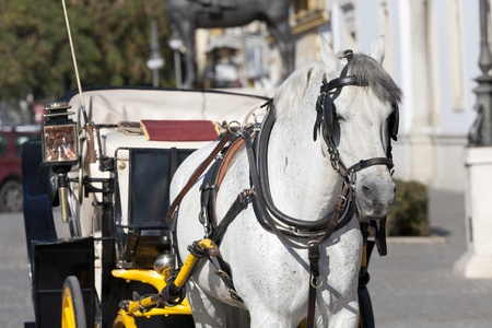 a horse, wearing a beautiful carriage