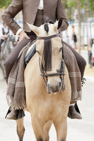 a Spanish horse at the Feria Stock Photo - 13997322