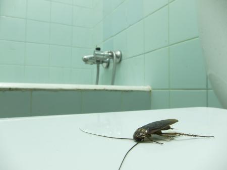 a cockroach in a dirty bathroom