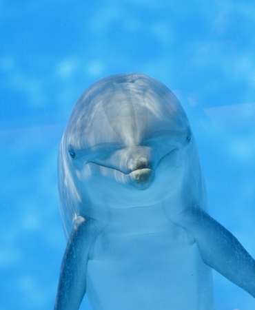 a dolphin underwater looking at the camera