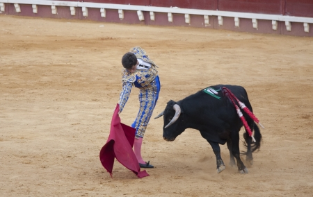 animal cruelty: PUERTO SANTA MARIA, SPAIN - SEPTEMBER 02: The bullfighter Paco Hidalgo fights in the Plaza del Puerto. September 2, 2012 in Puerto Santa Maria, Spain