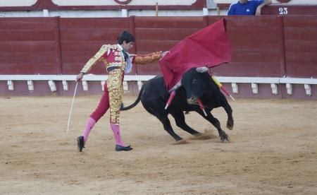 a bullfighter bullfighting a brave bull in the bullring of Puerto de Santa Maria