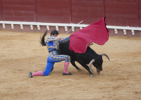 corrida: a brave matador facing a fierce bull Editorial