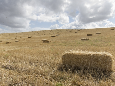 straw bale be collected right after harvest