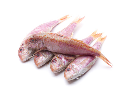 mullet: Fresh mullet, a delicious fish to eat
