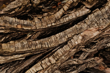 nervation: close up of a wood cortex