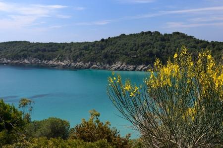 elba: A beautiful landscape of Fetovaia beach in Elba island-Italy