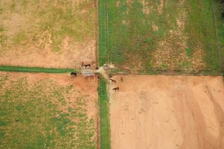 paddock: aerial viev of paddock with horses