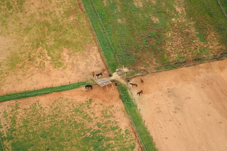 land mammals: aerial viev of paddock with horses