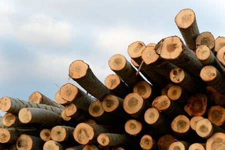 woodpile: A woodpile with many logs of wood ready for transformation Stock Photo
