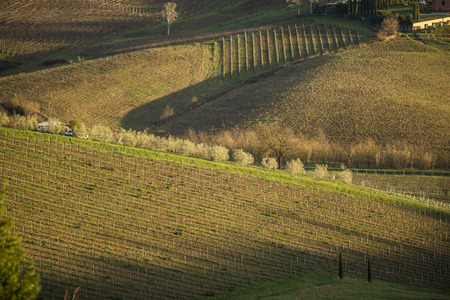 Tuscany's vineyards and country in winter, at sunset