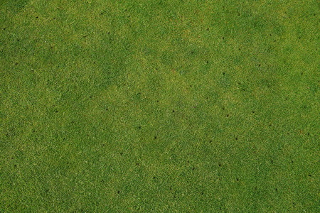 Aerated putting green on golf course - maintenance background.