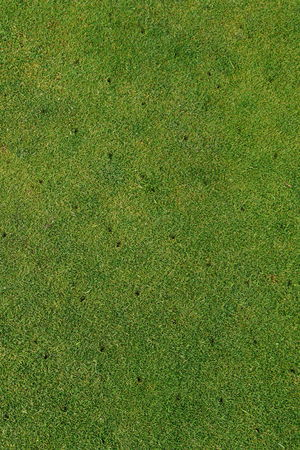 aeration: Putting green on golf course maintenance Aerated background vertical Stock Photo