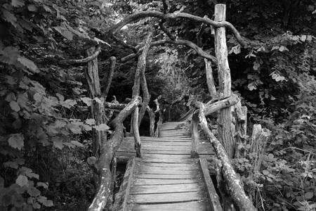 woodland  horror: spooky boardwalk in to a forest