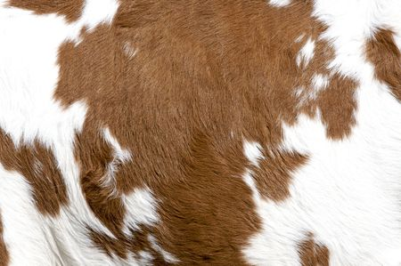 Cow texture 스톡 콘텐츠