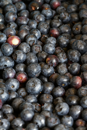 Fresh blueberries in a produce box