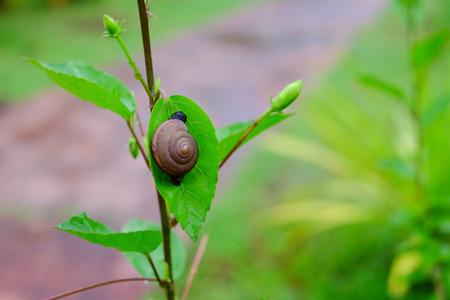 緑の葉の小さなカタツムリ