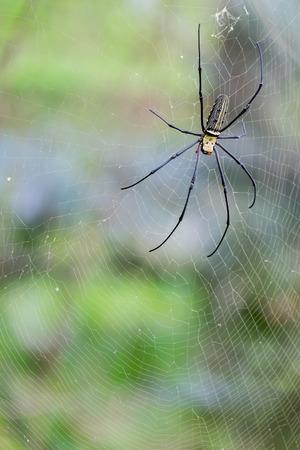 arthropod: A spider in a web