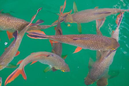 Fish in Cheow Lan Lake Stock Photo