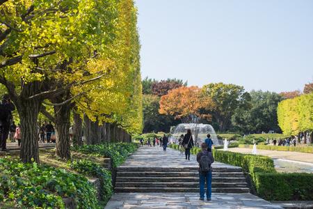 Tokyo autumn,Ginkgo bunches  at Showa Kinen Park ; 6th November 2016