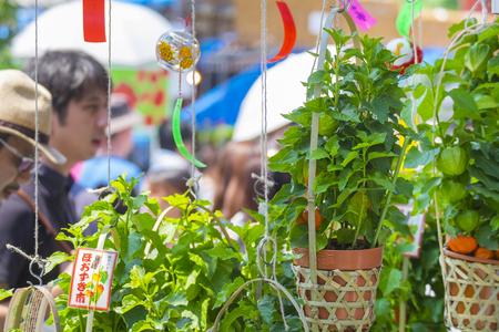 The festival for Japanese lantern flower at Asakusa,Tokyo,Japan; 9th July 2017