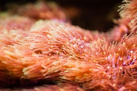 vivarium: Orange Aquarium plants with blurred background