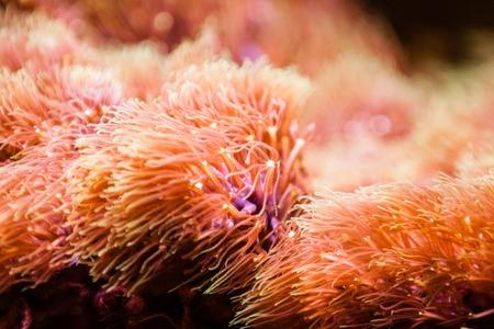 Orange Aquarium plants with blurred background Stock Photo - 26189355