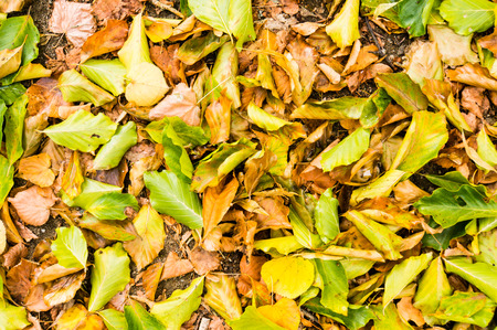 green brown: Autumn green brown orange yellow leaves background or pattern sharp