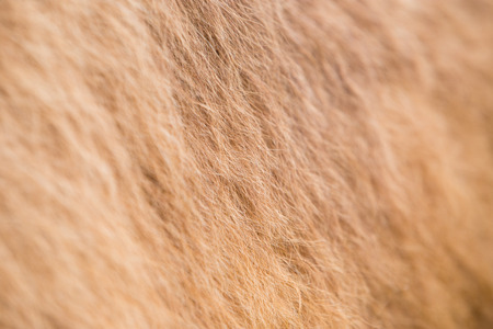 od: Camel fur texture od pattern or background with some blurred