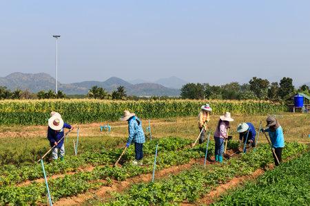 農村部の農民を山と背景にフィールドでの作業