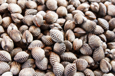 beachcombing: Background of fresh cockles for sale at market