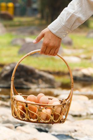 volatile: Close-up hand carry boiled eggs in hot spring at Jaeson National Park in Lampang, Thailand-2