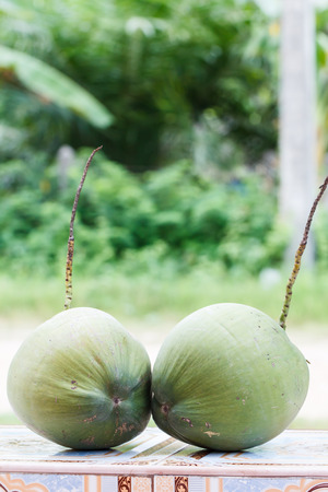 copra: Green and ripe coconut on the table