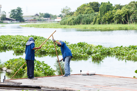 water sanitation: Two worker working to take water hyacinth in the river
