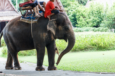 excite: Elephant walk with tourist rider-2