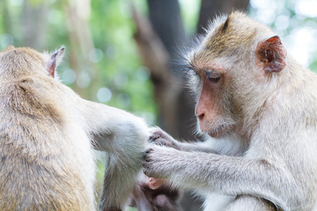 breastfeed: Monkey on action with family