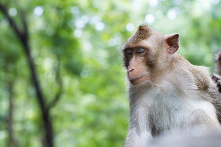 breastfeed: Close eye of happy monkey and happy time with green bokeh background