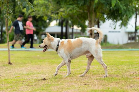 Dog walk in the public park with people walking in the background. Stock Photo