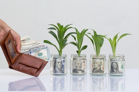 Growing plant step with banknote money dollar,start your investment on today