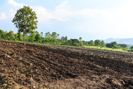 Land with soil preparation for peanut