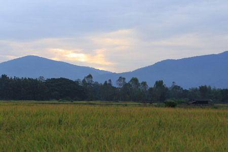 Green Rice Field with Mountains Background under Blue Sky, Chiang Mai, Thailand Stock Photo