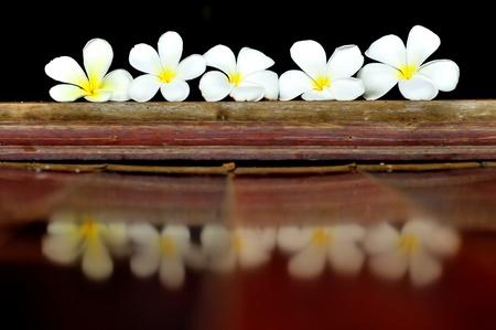 plumerias: A row of plumerias on the ground