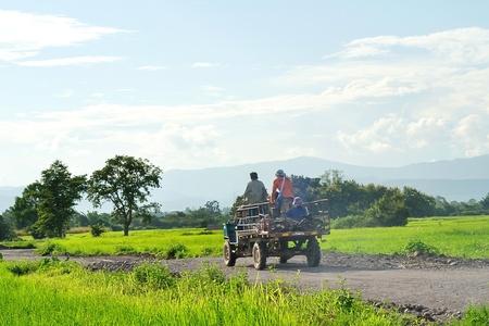 Farmer's truck in rice field