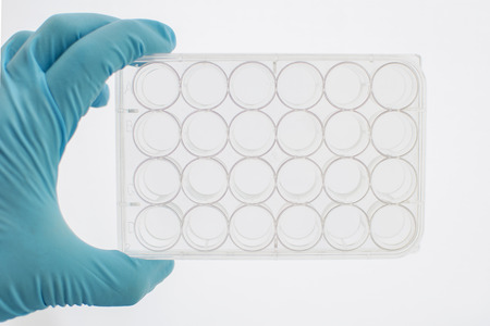 tissue culture: 24 wells tissue culture plate
